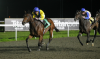 Kempton Tips: Nasri