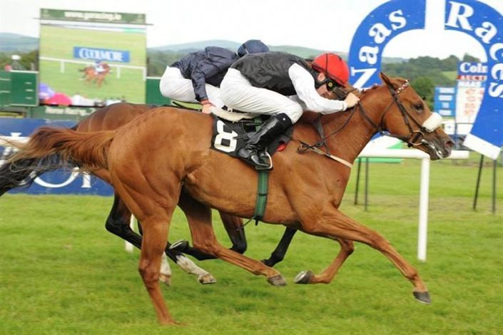 Naas Betting Odds and Racecourse Guide